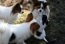 Dogs / My little pets