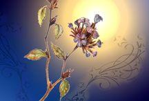 Bachblüten /  Jeder kennt sie, und nahezu jeder hat das Bachblütennotfallmittel (Rescue) schon mal eingesetzt. Die Bachblüten erfreuen sich heute einer grossen Beliebtheit, da sie bei kleineren Unpässlichkeiten schnell zur Hand sind und eingesetzt werden können.