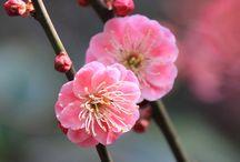 season - Ahhh...Spring