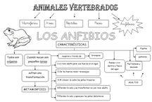 Esquemas animales