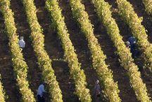 Polkura / Chile - präsentiert von Chile Wein Contor (Pinwand 4) / Spezialist für Syrah - so darf sich Sven Bruchfeld zu Recht bezeichnen. Beste Bewertungen bei Parker und in Wine&Spirits bestätigen unsere Auffassung! Natürlich bei Chile Wein Contor! www.cwc.de