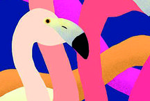 Flamingo Days