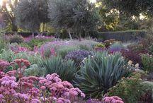 garden - ideas