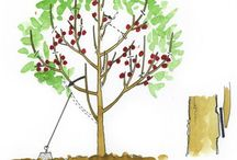Yard And Garden Stuff / by Shannon Poirier