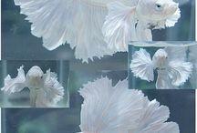 Beautiful fish
