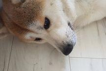 Yuki / My dog :)