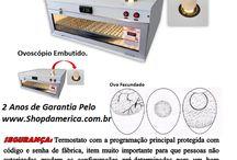 produtos/chocadeira-ovos-galinha-caipira-de-raca-com-ovoscopio