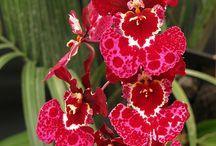 Flores ^-^