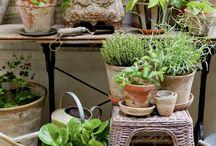 Kasvit terassille