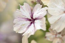Mijn collectie bloemen - wensenlijst