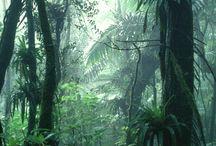 열대 우림