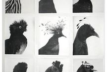 pigeons / a love affair with pigeons