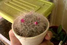 Cactus / by Daniela R