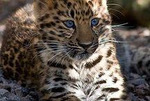 Leoparden2