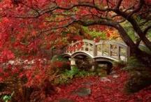 Bridges / by Deena Carpenter