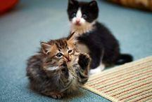 Különleges cicás képek / Special pictures about cats or kittens / Nem átlagos cicás képek.  Pictures about cats or kittens, what does not simple.