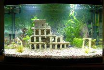 akvarietips