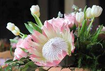 Exotic flowers arrangements