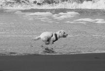 Beach Dogs / The beach bum life. www.scotchandhound.com