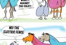 Humor ecuestre / Porque no nos hechamos unas risas!? Chistes relacionados con la equitación y sus cosas cotidianas que seguro hemos vivido alguna vez todos los amantes del caballo.