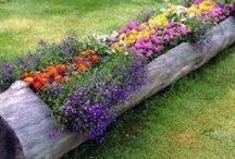 Flowers.!.!
