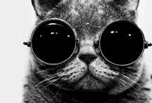 Nerd Cat..