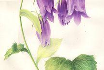 Akvarely kytky