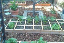 Gardening / Gardening ideas and tutorials.