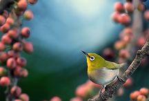 Birds / by Michelle Galeoto Lamoureux