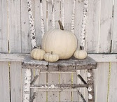 White Pumpkins / by Michelle Murray