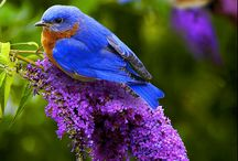 Birds Galore! / Beautiful birds in all colors.