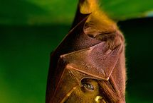 Bats, oh how I love them <3