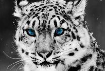 Animals / O zvieratkach