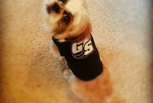 Georgia Southern Furry Fans / Our furriest, cutest and True Blue fans! Submit your furry fan photos to socialmedia@georgiasouthern.edu. / by Georgia Southern University