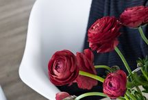 Flowers & Plants / Zeit für Blumen, Pflanzen und andere Schönheiten. Enjoy the little things, Silent Beauties and DIYs for flowers and plants, urbanjungle...