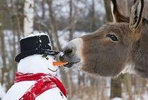I Love... Animals