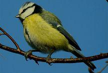 fugler / birds