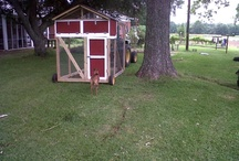 MY CHICKEN TRACTOR / by Kay Jerome