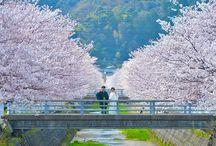 TOTTORI(鳥取)