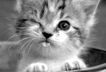Χαριτωμένες γάτες