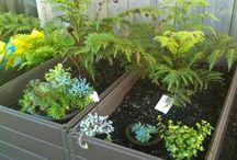 Vege garden and chicken coop