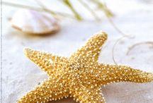 Starfish / by M K