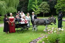 Donkey Hire Companies / Donkeys for hire for children's parties, carnivals & fetes, fun & fundraising days, care home visits, schools + educational organisations, weddings + christenings, Christmas and Easter events, film & promotional work.