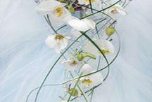 ANEMON / Kwiaciarnia Gliwice