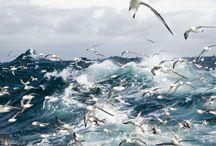 deniz ve herşey