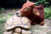 i animals
