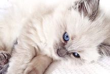 Cute Animals / All the cute animals in the world
