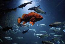 under water / by Robbie Williams