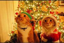 cristmas music