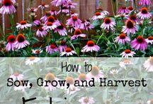 Tuin / Tips voor de tuin
